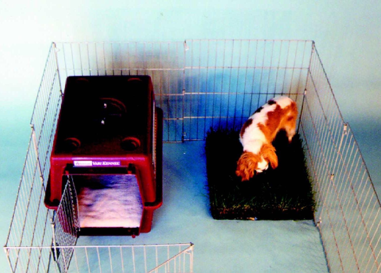 www.dogstardaily.com