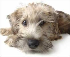 Mixed Breed Dogs In Akc Obedience