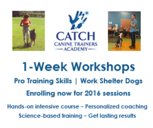 Catch Canine Trainers Academy - Enrolling Now