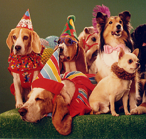 110_Costume_Dogs_1.png