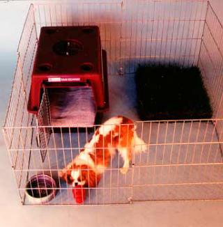Shelter dog house training