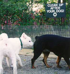 600_Dog_park_Sniff_1.png