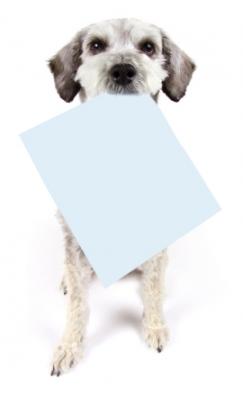Dog_holding_paper.jpg