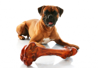 Mastiff_Big_Bone_copy.png