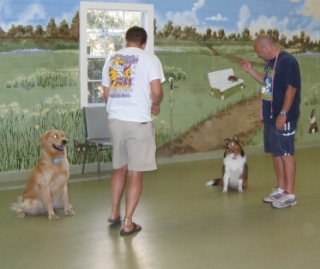 Training tools aren't required in this off-leash class