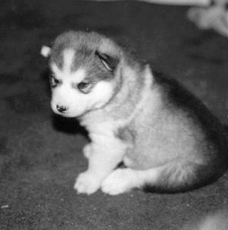 Omaha-Beagle.jpg