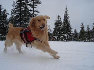 Tucker Running.jpg