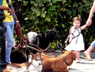 dogs and kids karen wild blog