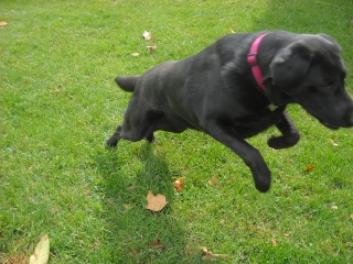 Who could not smile at leaping Doobie, who learned to play.