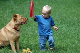 Baby and dog with frisbee