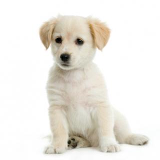 adopt a dog