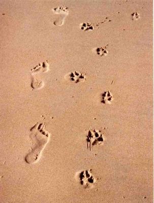 karen wild foot prints and dog paw prints walk together across sand