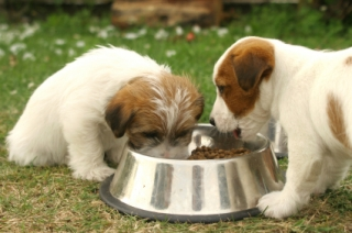 puppies sharing a bite
