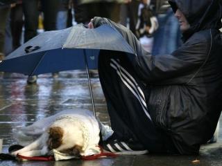 dog asleep under umbrella in rain karen wild