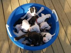 z_bucketopuppies2_3_small_preview.jpg