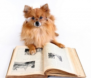 Library Dog Animals Funny Pictures