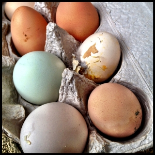 Normal dog behavior is messy and delightful, just like farm-fresh eggs.