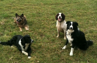 Group stay, Muttamorphosis Dog Training.