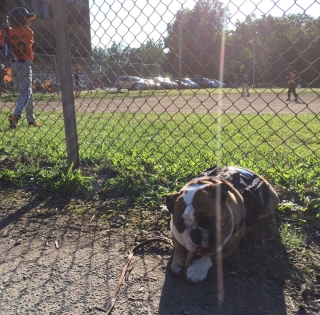 Mack enjoys an All American Pastime. Bully sticks and baseball!