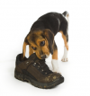 Beagle_pup_shoe.png