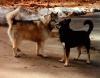 DogCommunication.png
