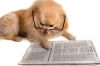 Dog with glasses on reading a paper.