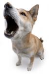 Dog_singing.png