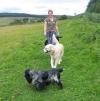 Dog Walking with a Head Collar, Muttamorphosis Dog Training.