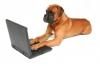 Mastiff_computer1.jpg