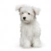 Pup white sit.jpg