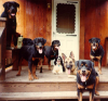 RottiesonPorch.png