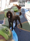 dog at playground, dog and frog, dog playing