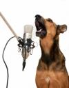 SingingShepherd.jpg