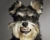 article national dog bite prevention week dog star daily leslie fisher elkton md