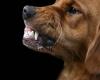 dog-food-aggression.jpg