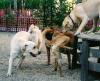 dog_park_sniffs.png
