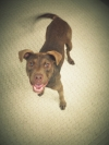 Dove is an Open Paw shelter dog available for adoption from the Alachua County Animal Shelter