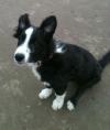 Muttamorphosis Dog Training new puppy Guinness