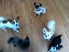Patchwork Pups copyright Karen Wild Pawprint Intellidogs ltd