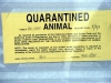 Orange QUARANTINED ANIMAL sign in window