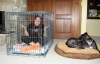 Dog Owner in Crate with Dog Relaxing Outside Crate