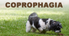 My Dog Eats Poop - Coprophagia