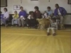 Embedded thumbnail for Puppies at Play - SIRIUS Puppy Training Classic