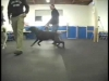 Embedded thumbnail for Jazz Up & Settle Down – SIRIUS Adult Dog Training