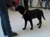 Embedded thumbnail for Week 3 Part 2 (SIRIUS Berkeley Puppy 1)