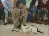Embedded thumbnail for Waiting For Down - Training the Companion Dog 1 – Socialization & Training