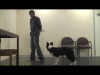 Embedded thumbnail for Muzzles Vlog: Can Dogs learn to Like Wearing Them?