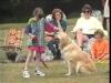 Embedded thumbnail for Energizing Beth- Dog Training for Children