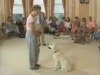 Embedded thumbnail for Proofing Jinty's Sit Stay - Training the Companion Dog 4 – Recalls & Stays
