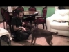 Embedded thumbnail for Dog Training Ideas: Veterinary and care giving behaviours